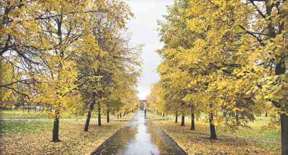 Тропаревский парк осенью