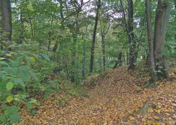 Растительность в Филевском Парке осенью