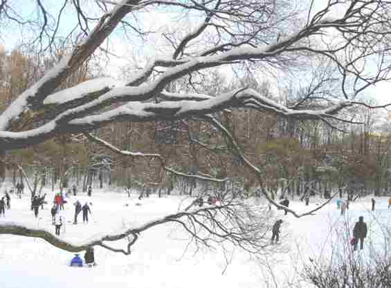 Филевский парк. Каток на замёрзшем пруду
